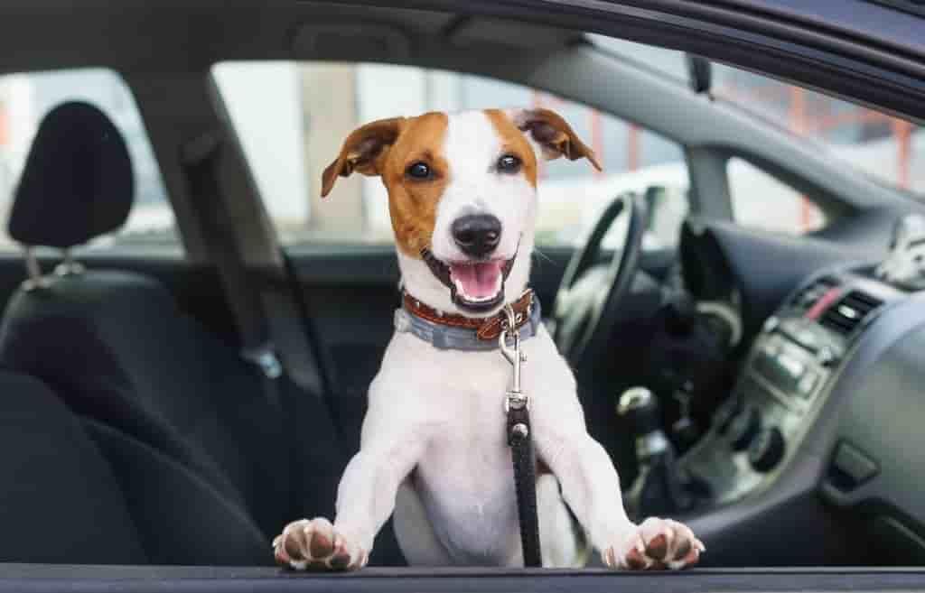 usaa renters insurance dog bite car