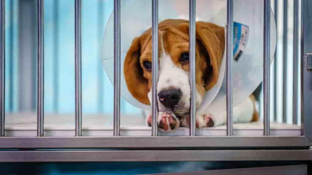 snoopy car insurance dog treatment