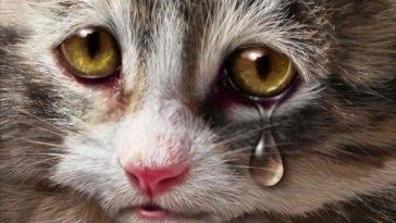 cat insurance health